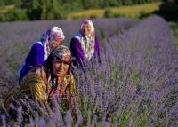 Lavanta Kokulu İdris Köyü - Fotoğraf: Ozer Pakyurek