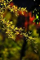 Sarı Yapraklar...
