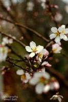Çıçek