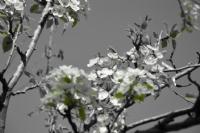 İlk Bahar