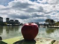 Bir Elma...