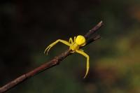 Örümcek_5