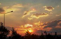 Günbatımında Kuşlar