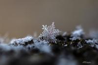 Kar Tanesi - Fotoğraf: Mahmut Çalışkan