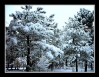 Kış Manzaram