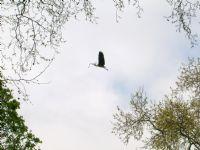 Yuvayı Dişi Kuş Yapar