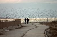 Günbatımında Kuşlar Ve İnsanlar