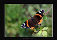 Butterfly... 2