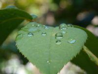 Yaprak Ve Yağmur