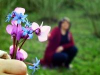 Anneme Bahar Çiçekleri