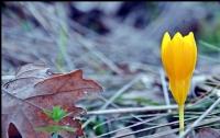 Her Yeni Gün ;yeni Bir Umut Demek..