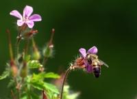 İki Çiçek Bir Böcek
