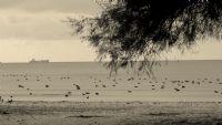 Deniz Ve Kuşlar