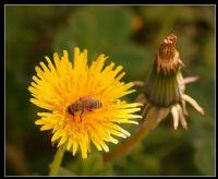 Bir Çiçek Daha...