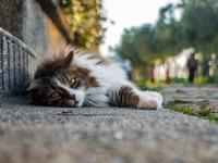 Kedi Candır