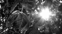 Işıkla Beslenir Doğa