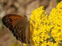 Sarı Çiçek Ve Kelebek