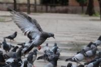 Cami Bahçesindeki Kuşlar