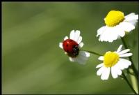 Bahar  Gezintisi