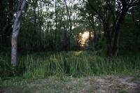 Akşam Üzeri Güneşim Son Çırpınişları