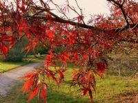 Gün Batımında Kırmızı.. (botanik 3)