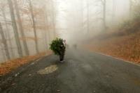 karadeniz - Foto�raf: Selma Kotanc�
