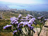 Mor Dağ Çiçeği Ve İzmir Körfezi
