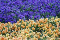 Çiçek Bahçesi...