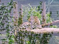 Bursa Zoo 1