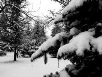 Kış 1