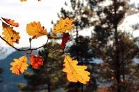 Sonbaharın Gelişi