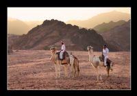 Sina Çölü - Mısır