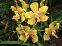 Orkide...