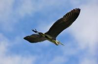 Özgürce Uçmak
