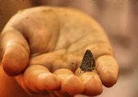 Elde Var Kelebek