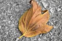 Yalnız Yaprak