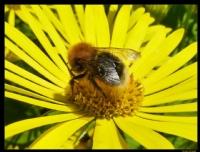 Sarı Çiçek Ve Sevdalısı