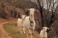 Kaçilerin Şafağı