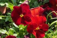 Çiçek Gibi...