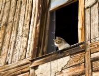 Ev Sahibi Camdan Bakıyor :)