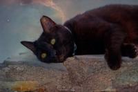 Bugün Ki Modelim Kara Kedi