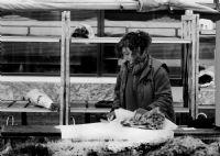 Ekmek Ve Gül
