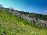 Baharın Renkleri