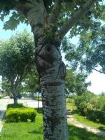 Ağaç Beni İzliyordu 🤗