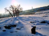 Kara Kış Kara Kedi