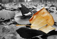 Sarı Sonbahar