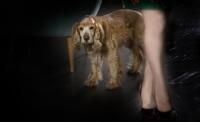 Köpek Ve Kadın
