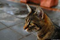 Kedi Portre