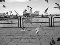 Zonguldak-liman