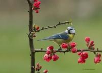 Hoşgeldin Bahar